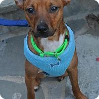 Adopt A Pet :: Emerald - Atlanta, GA