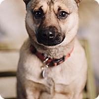 Adopt A Pet :: Boscoe - Portland, OR