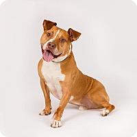 Adopt A Pet :: Pickles - Richmond, VA