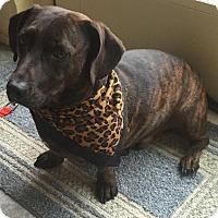 Adopt A Pet :: Dewey - Princeton, KY