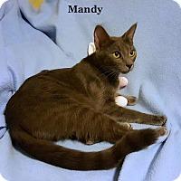 Adopt A Pet :: Mandy - Bentonville, AR