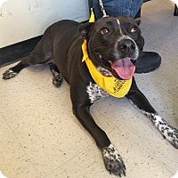 Adopt A Pet :: Lady in CT - Manchester, CT