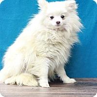 Adopt A Pet :: Camry - Waldorf, MD