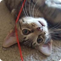 Adopt A Pet :: Yoshi-13284 - Richardson, TX