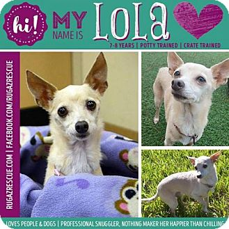 Chihuahua Mix Dog for adoption in New Port Richey, Florida - Lola