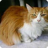 Adopt A Pet :: Muffin - Port Jervis, NY