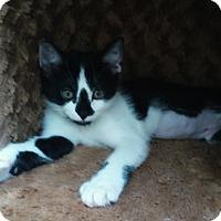 Adopt A Pet :: Lani - Chula Vista, CA