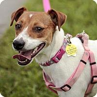 Adopt A Pet :: FERDI <3 <3 <3 - Davie, FL