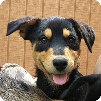 Adopt A Pet :: Gale  - Snow Hill, NC