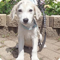 Adopt A Pet :: Weatherly - West Chicago, IL