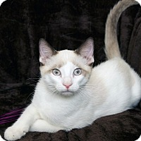 Adopt A Pet :: Boscoe - St Louis, MO
