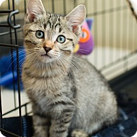 Adopt A Pet :: Bronte - Los Angeles, CA