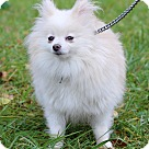 Adopt A Pet :: Zailee ADOPTION PENDING