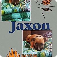 Adopt A Pet :: Jaxon - Tomah, WI