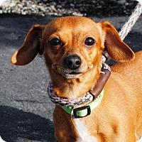 Adopt A Pet :: Goldie - Portola, CA