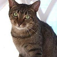 Adopt A Pet :: Tawny - New Bern, NC