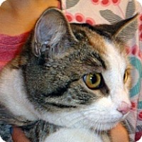 Adopt A Pet :: Melody - Wildomar, CA