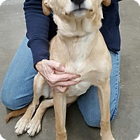 Adopt A Pet :: Fawn - Henderson, KY