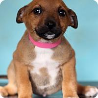 Adopt A Pet :: June - Waldorf, MD