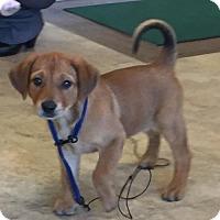 Adopt A Pet :: Remy - Royal Palm Beach, FL