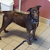 Adopt A Pet :: Zoi - Jackson, MI