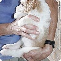 Adopt A Pet :: Finnegan Wilder - Southampton, PA