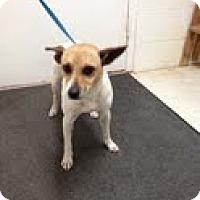 Adopt A Pet :: Randy - Lancaster, VA