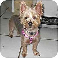 Adopt A Pet :: Ellie - Homestead, FL