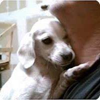 Adopt A Pet :: Dudley - Fresno, CA