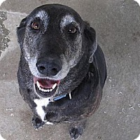 Adopt A Pet :: Lucy**ADOPTED** - Chicago, IL
