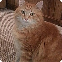 Adopt A Pet :: Leo - Stafford, VA