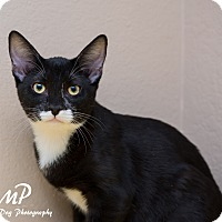 Adopt A Pet :: Briggs - Fountain Hills, AZ
