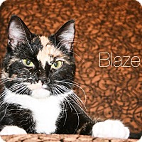 Adopt A Pet :: Blaze - Bentonville, AR