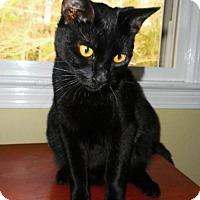 Adopt A Pet :: Ollie - Hampton, VA