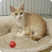 Adopt A Pet :: TAFFY! - Owenboro, KY
