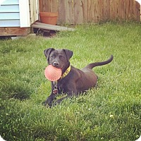 Adopt A Pet :: Joan Jett - Winchester, VA