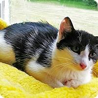 Adopt A Pet :: Emily Rose - N. Billerica, MA