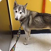 Adopt A Pet :: Noelle - Sugar Land, TX