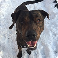 Adopt A Pet :: Jake - Mt Vernon, NY