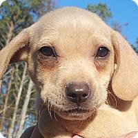 Adopt A Pet :: Brenda - Staunton, VA