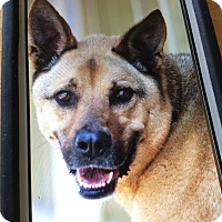 Adopt A Pet :: ROCKY VON REINO - Los Angeles, CA