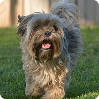Adopt A Pet :: Archie - Abilene, TX