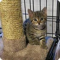 Adopt A Pet :: Fergie - Geneseo, IL