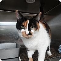 Adopt A Pet :: Miss Cassie - Elyria, OH