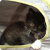 Adopt A Pet :: Gizmo - Nashville, TN