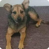 Adopt A Pet :: BooBoo - Bradenton, FL