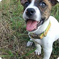 Adopt A Pet :: Brantley - Charlotte, NC