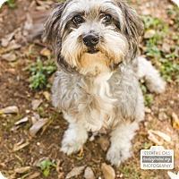 Adopt A Pet :: Thomas - Leander, TX