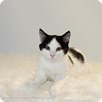 Adopt A Pet :: Rogue - St. Louis Park, MN