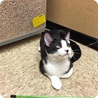 Adopt A Pet :: Casey - Atlanta, GA